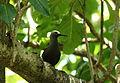 Ile Aride - Oiseau (27).JPG