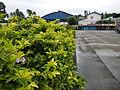 Indang,Cavitejr8269 26.JPG