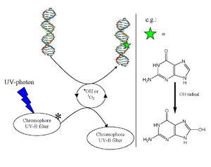 Indirect DNA damage - Image: Indirect DNA damage