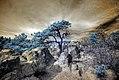 Infrared HDR Palmer Park Colorado Springs.jpg