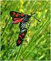 Insectos en Ordes (Galiza).jpg