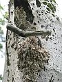 Insektengespinst3.JPG