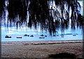 Isola di Praslin - panoramio.jpg