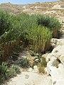 Israel Hiking Map עין עקב עליון.jpeg