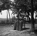 Ivan Babič iz Sabadinov pestva (pesto je stopa) s toporiščem sekire 1950.jpg