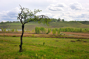 Izborsk Valley. landscapes12.jpg
