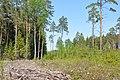 Izcirtums, Valgundes pagasts, Jelgavas novads, Latvia - panoramio.jpg