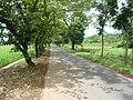 Jalan Kajen-Kandangserang - panoramio.jpg