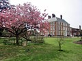 Japanese Cherry, Forty Hall, Enfield - geograph.org.uk - 1843429.jpg