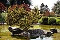 Japanese Friendship Garden (4527097802).jpg
