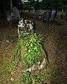 Jewish cemetery Otwock (Karczew - Anielin) IMGP7669.jpg