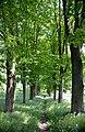 Jeziorany,Poland,EU. - panoramio (15).jpg