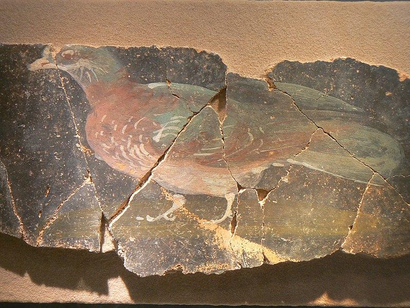 Fichier:Jublains musée fresque pigeon.JPG