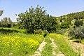 Judean Foothills, Israel - panoramio (1).jpg
