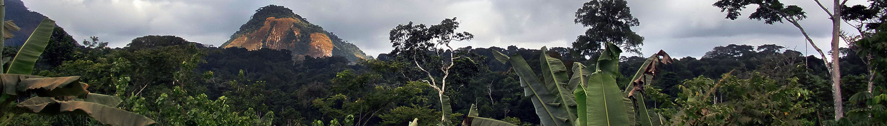 Jungle-near-Oyala,-Equatorial-Guinea-banner.jpg
