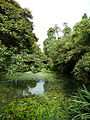 Jungle - The Lost Gardens of Heligan (9757817983).jpg