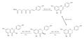 Kaempferol biosynthesis.png