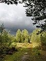 Kalmthoutse Heide 2.jpg