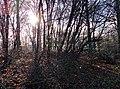 Kapellen-freudenberg-l418-weg-wuppertal-tobefree-20151127-115814.jpg