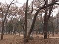 Kong Yuxu - western bixi - seen from NNE - P1060262.JPG