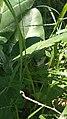 Kumbang 20201029 095814.jpg