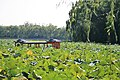 Kunming Lake IMG 0406.jpg
