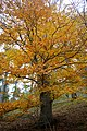 LSG Sudmerberg - Bäume (5).jpg