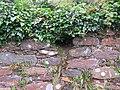 La Niche vide de la tête de Crom Dubh à Cloghane, Castlegregory, Co. Kerry, Irlande.jpg