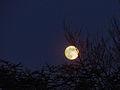 La pleine lune du 11 janvier 2009 (3185406793).jpg