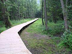 Lac chambon chemin1.JPG
