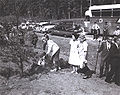 Lady Bird Johnson planting dogwood 1965.jpg