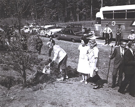 Lady Bird Johnson oversees the planting of a dogwood as a part of her beautification. Lady Bird Johnson planting dogwood 1965.jpg