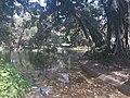 Lago do Campo de Santana.jpg