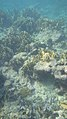 Laika ac Playa Kalki (11879595335).jpg