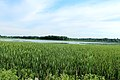 Lake Nichwagh, Green Oak Township, Michigan.JPG
