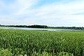 Lake Nichwagh, Green Oak Township, Michigan.JPG