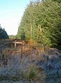 Lamerty Forest - geograph.org.uk - 618940.jpg