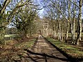 Lane up to Bunkers Hill on Copythorne Common on sunny winter's day - geograph.org.uk - 470786.jpg