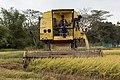 Langkawi Malaysia Rice-Harvesting-05.jpg