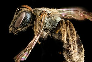Bee learning and communication - Bees learn in a variety of ways.