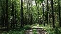 Lasy kostkowskie , On a hiking trail through Kostkowo woods - panoramio (1).jpg