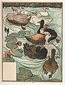 Le-vilain-petit-canard-5-525b2442.jpg