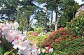 Lea Rhododendron Gardens - geograph.org.uk - 14635.jpg