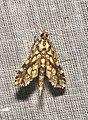 Lepidoptera (15863854260).jpg