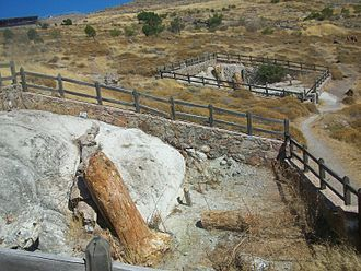 Lesbos - Petrified forest of Lesbos