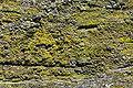 Lichen DSC00605.JPG