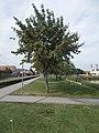 Line of trees, Kavicsos Lake 2018 Mezőkövesd.jpg