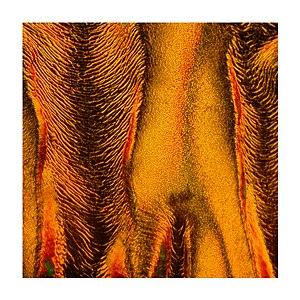 Liquid crystal textures.jpg
