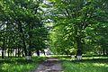 Livchytsi Park RB.jpg