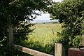 Llanrhidian Higher Community, footpath at Cilonen Road - geograph.org.uk - 185088.jpg